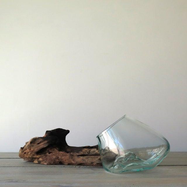Glass on Teak Driftwood Terrarium - Image 5 of 7