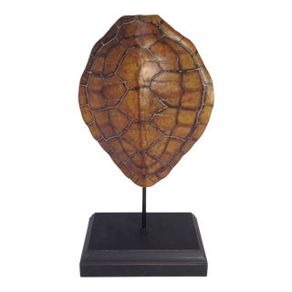 Turtle Shell Sculpture on Stand