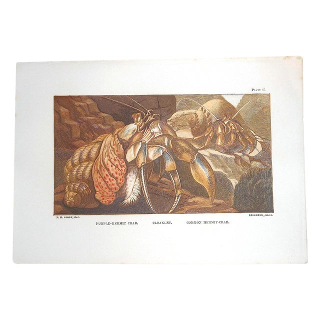 Antique Sea Creature Lithograph - Image 1 of 3
