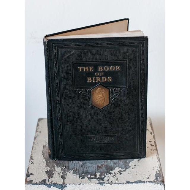 Image of The Book of Birds, 1927