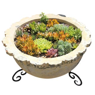 Earth Ware Planter with Succulents
