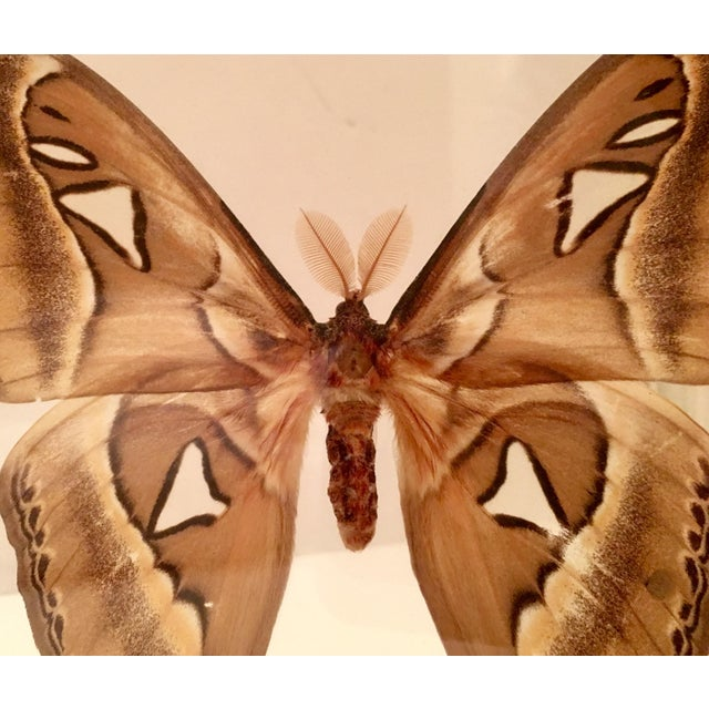 Shadow Box Framed Butterflies - A Pair - Image 6 of 7