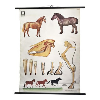 1960s Vintage German Educational Chart of a Horse