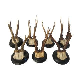 Black Forest Deer Mount Collection