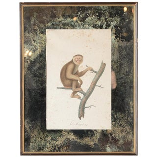 18th-C. Colored Monkey Print by Jean Baptiste