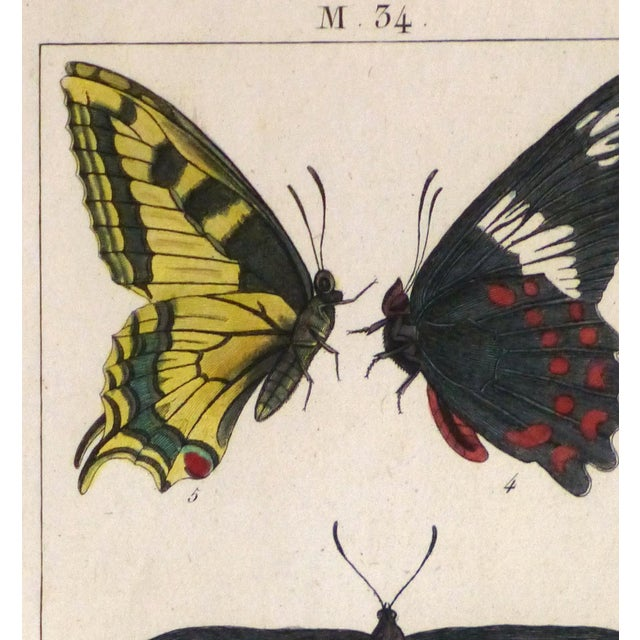 19th-Century Butterflies Engraving Print - Image 2 of 4