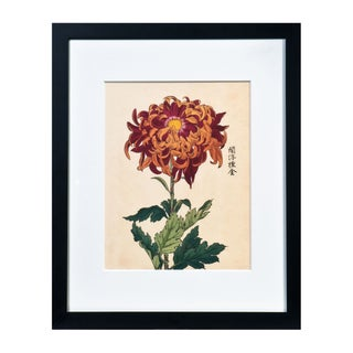 "Chrysanthemum Giclée Print Titled ""Love"""