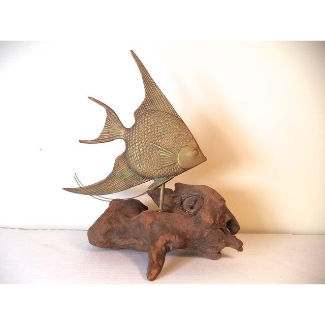 Image of Brass Angel Fish on Driftwood