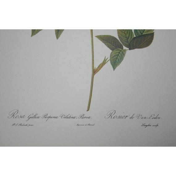 Image of Original Pierre Redouté Botanical Prints - S/3