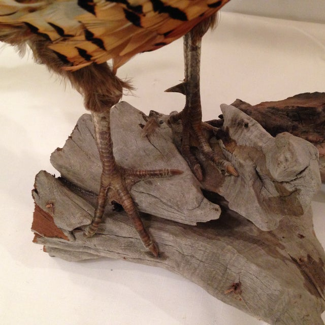 Image of Stuffed Pheasant Mounted on Driftwood
