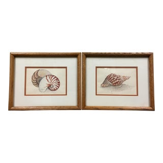 Vintage Nautical Shell Prints - A Pair
