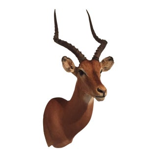 Impala Taxidermy Mount