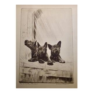 Scottie. Puppies by Diana Thorne, 1930s