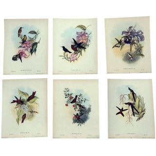 1940s John Gould Hummingbird Lithographs - Set of 6
