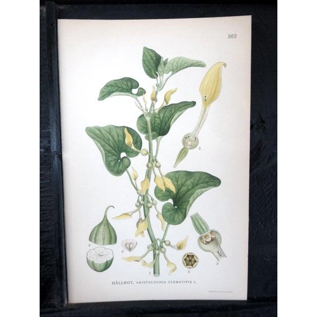 Swedish Floral Prints - Image 6 of 6