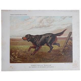 "Antique Dog Lithograph ""Gordon Setter"""