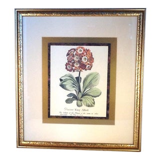 Vintage Botanical Matted & Framed King Alfred Print