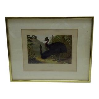 "Circa 1900 Vintage L. Prang & Company Lithograph ""Cassowary"" Print"