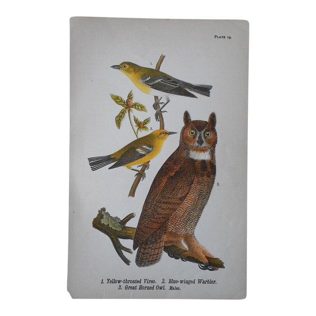 Image of Antique Owl Chromolithograph