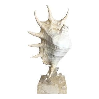 Crystal Quartz Embedded Sea Shell
