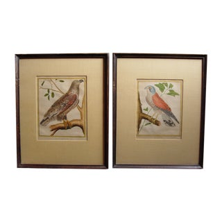 1786 French Bird Engravings - A Pair