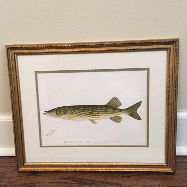 Antique Framed Fish Print - Image 2 of 4