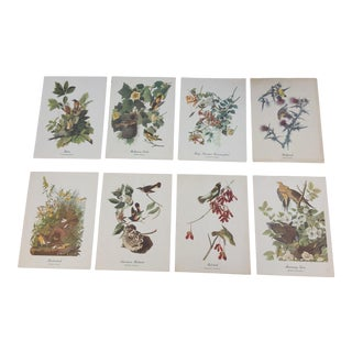 Vintage Prints of American Birds by Audubon - Set of 8