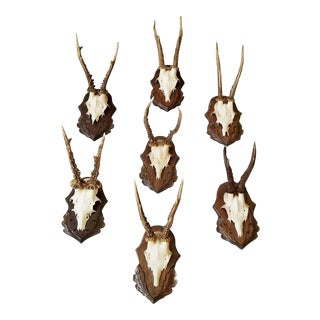 Set of Twenty Three Roe Deer Antler Trophies with Foliate Carved Backs