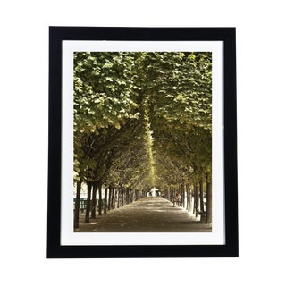 Framed Original Photograph: Paris Park