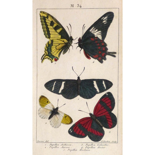 19th-Century Butterflies Engraving Print - Image 1 of 4