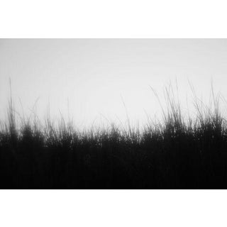 Rinne Allen Lowcountry Marsh Photograph 1