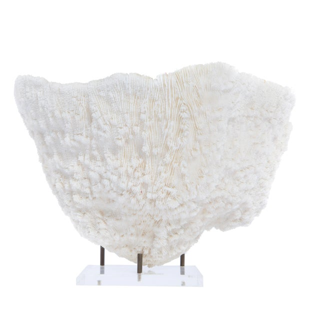 LARGE BOWL-SHAPED CORAL SPECIMEN ON STAND - Image 5 of 11