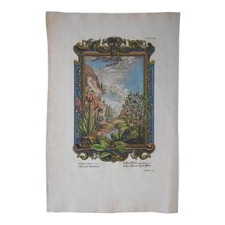 Antique Engraving, Landscape with Cassia & Iris