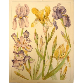 """Iris Flower"" French Colored Print"