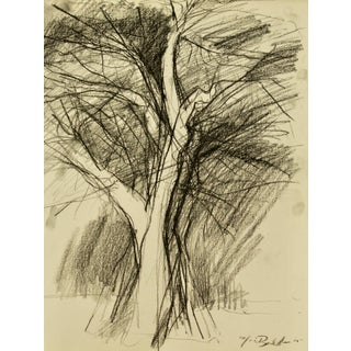 """Tree in Winter"" Drawing"