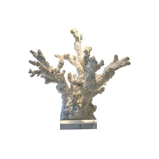 White Coral Sculpture With Lucite Base