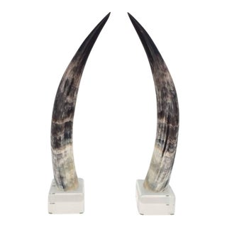 Mounted Steer Horns on Acrylic Bases - A Pair