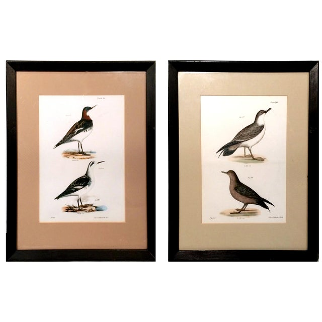 Image of Antique Natural History of NY Bird Prints - A Pair