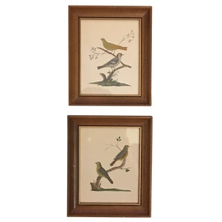 Framed Birds on Branches Prints - a Pair