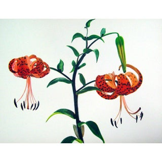 Vintage Tiger Lily Lithograph