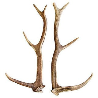 Natural Shed Deer Antlers - A Pair