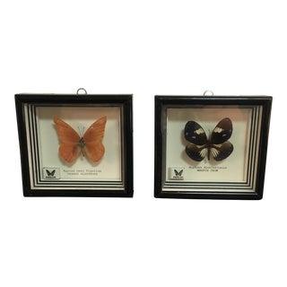 Framed Butterfly Specimens - Pair