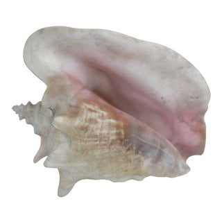 Natural Pastel Conch Shell