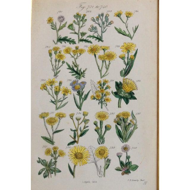 Botanical Prints C-1859 - A Pair - Image 3 of 9