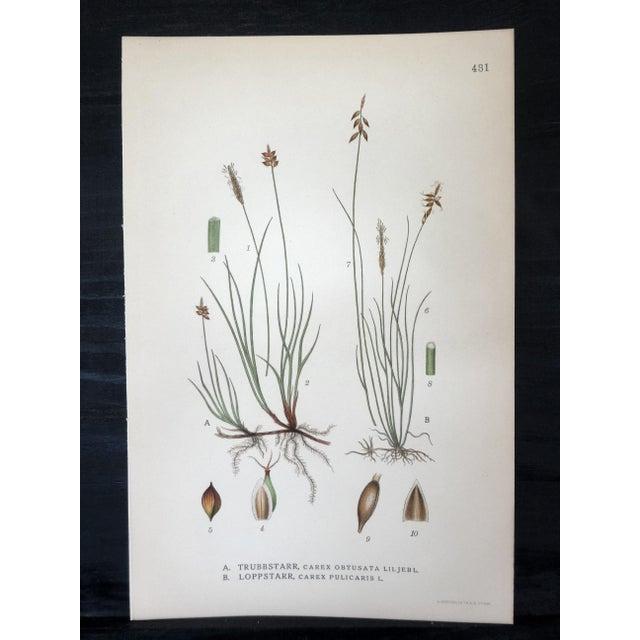 Swedish Floral Prints, Set of 4 - Image 6 of 6
