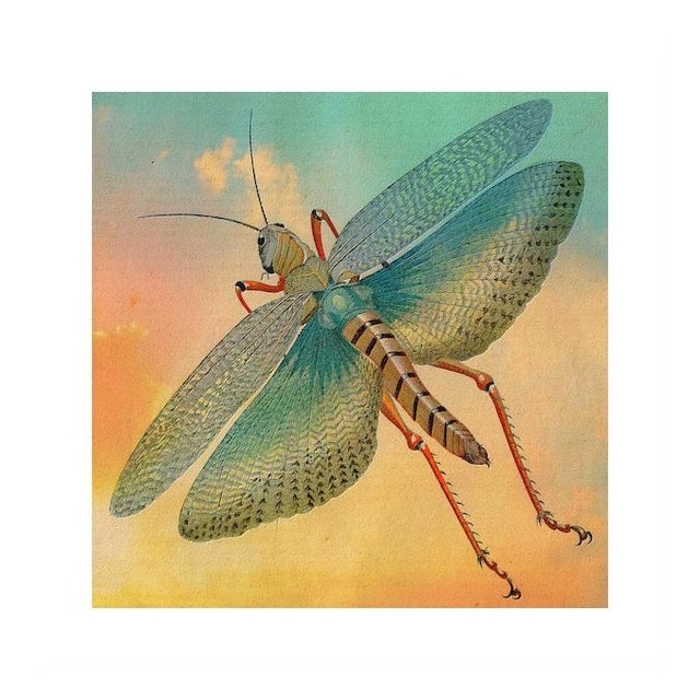 Antique 'Flying Grasshopper' Archival Print - Image 1 of 4