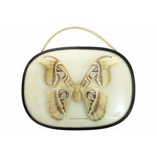 Natural Attocas Atlas Moth Framed Specimen