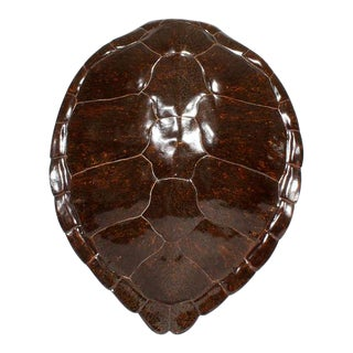 Faux Turtle Shell Mounted on a Lucite Stand