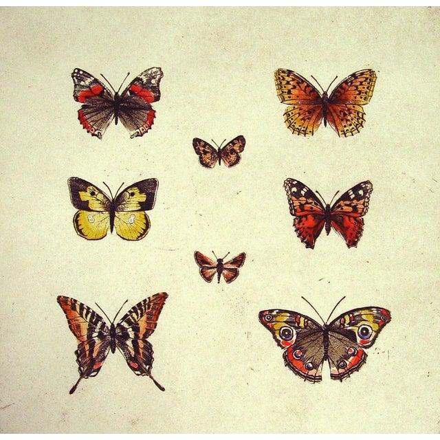 Sandy Scott Etching - Butterflies II - Image 2 of 4