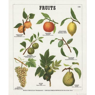 """Emile Deyrolle """"Fruits II"""" Lithograph Poster"""